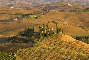 A farm house in Tuscany surrounded by olive trees and cypress trees, Italy, Europe