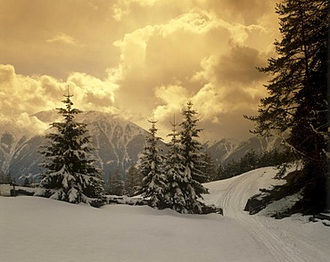 Snow-covered fir trees, evening clouds near Seefeld Moesern in front of the Wetterstein Mountains, Tyrol, Austria, Europe