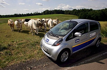 Cattle watching an electric car of Enso, Energie Sachsen Ost AG, during a test drive, Freital, Saxony, Germany, Europe