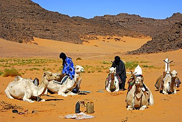 Tuareg camp with dromedaries, Sahara, Libya, North Africa, Africa