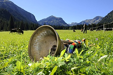 Cow bell lying in a meadow, for decoration of the cows for the cattle drive, Tannheim, Tannheimer Tal valley, Tyrol, Austria, Europe
