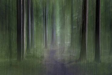 Enchanted forest, abstract, Harestua, Norway, Europe