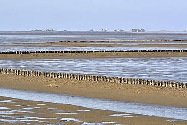 View across the Wadden Sea with coastal protection, groynes, Hallig Langeness, small island, at back, North Sea shore, Schleswig-Holstein Wadden Sea National Park, Dithmarschen region, Schleswig-Holstein, Germany, Europe
