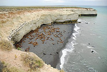 Sea lion and cormoran colony at Punta Loma, near Puerto Madryn, Chubut province, Patagonia, Argentina