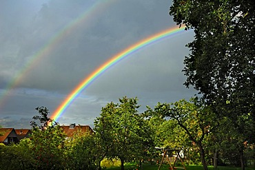 Rainbow over an orchard, Voegelsen, Lower Saxony, Germany, Europe