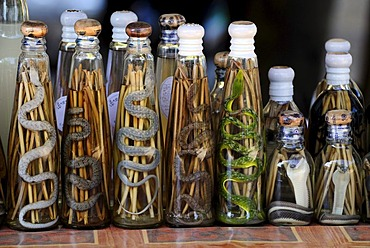 Cobras and other dead snakes in bottles of liquor, Laos, Southeast Asia, Asia