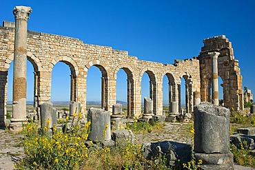 Basilica, Roman ruins, ancient city of Volubilis, UNESCO World Heritage Site, Morocco, North Africa, Africa