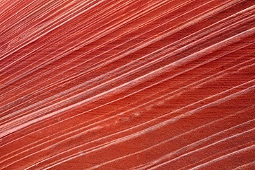 Detail of typical Liesegang Bands, Liesegangen Rings, or Liesegang Rings, The Wave, banded eroded Navajo sandstone rock, North Coyote Buttes, Paria Canyon, Vermillion Cliffs National Monument, Arizona, Utah, USA