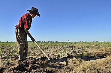 Old man cultivating sugar cane for the production of bio diesel, Montero, Santa Cruz, Bolivia, South America