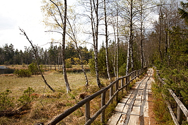 Wooden footpath, hiking trail, Naturschutzgebiet Wildseemoor nature reserve, Kaltenbronn, Gernsbach, Black Forest, Baden-Wuerttemberg, Germany, Europe
