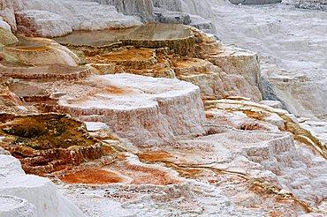 Mammoth Hot Springs, Yellowstone Nationalpark, Wyoming, USA, Vereinigte Staaten von Amerika