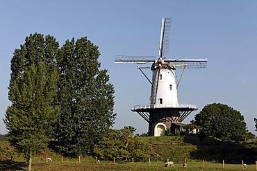 Dutch windmill, Veere, Walcheren, Zeeland, Netherlands, Europe