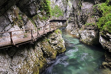 Track in the Vintgar Gorge near Bled, Triglav National Park, Slovenia, Europe