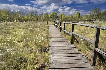 Boardwalk in the Naturschutzgebiet Dosenmoor nature reserve, regenerating and partially preserved bog, Kreis Neumuenster county, Schleswig-Holstein, Germany, Europe