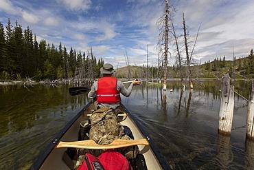 Canoeists on Mandanna Lake, canoeing, paddling a canoe, clear water, dead trees, Yukon Territory, Canada