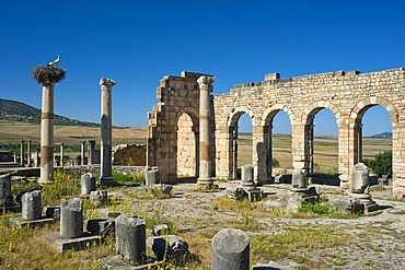 Basilica, Roman ruins with a stork's nest, ancient residential city of Volubilis, northern Morocco, Africa