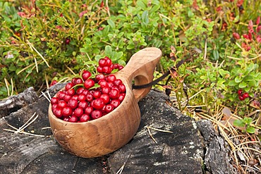 Freshly picked cranberries in a small wooden bowl, Norway, Scandinavia, Europe