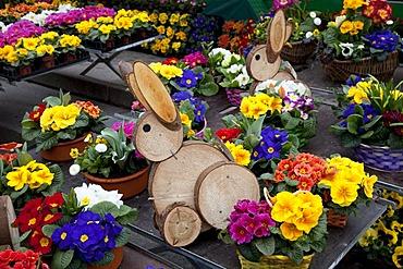 Easter bunnies made of wooden disks standing between primroses