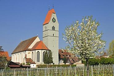 St. John the Baptist, catholic church, Hagnau on Lake Constance, Baden-Wuerttemberg, Germany, Europe