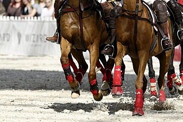 Polo horses galloping through the sand, Airport Arena Polo Event 2010, Munich, Upper Bavaria, Bavaria, Germany, Europe