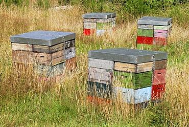 Bee hives, heathland, next to State Highway 46 near Turangi, North Island, New Zealand