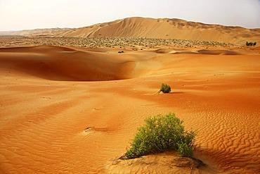 Red sand, sand dunes, Empty Quarter region of Rub'al-Khali desert where only few plants survive, Abu Dhabi, United Arab, Emirates, Middle East, Asia