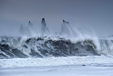 The Reynisdrangar pinnacles between by strong waves on the wintry Reynisfjara beach at Vik I Myrdal, Iceland, Europe