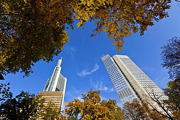 ECB, European Central Bank and Commerzbank Tower in autumn, Frankfurt am Main, Hesse, Germany, Europe