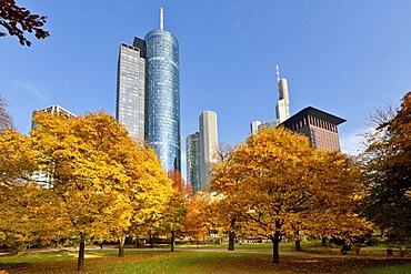 ECB, European Central Bank, Helaba Hessische Landesbank, Commerzbank Tower and Japan Tower in autumn, Frankfurt am Main, Hesse, Germany, Europe