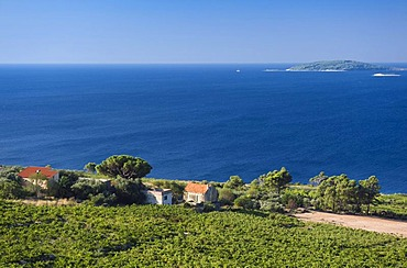 Coast with vineyards, Orebic, Peljesac Peninsula, Dalmatia, Croatia, Europe