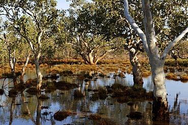 Australian outback landscape, Pilbara, Western Australia