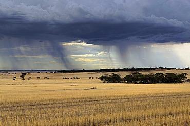 Storm over farmland, Carnamah, Western Australia, Australia