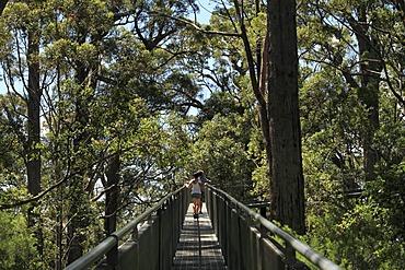 Valley of the Giants tree top walk, Walpole-Nornalup National Park, Western Australia, Australia