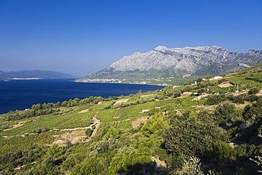 Coast with vineyards overlooking the Island of Korcula, Orebic, Peljesac Peninsula, Dalmatia, Croatia, Europe