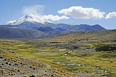 Guallatiri Volcano, course of a river, fertile valley, village of Guallatiri, Reserva Nacional de las Vicunas, Lauca National Park, Altiplano, Norte Grande, Northern Chile, Chile, South America