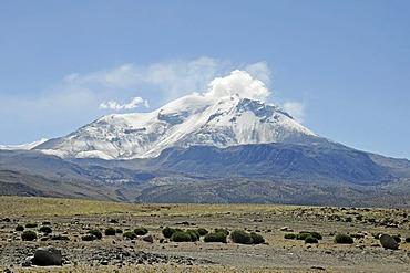 Guallatiri Volcano, Reserva Nacional de las Vicunas, Lauca National Park, Altiplano, Norte Grande, Northern Chile, Chile, South America