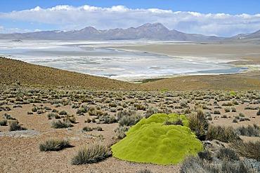 Salar de Surire, Salt Lake, Reserva Nacional de las Vicunas, Lauca National Park, Altiplano, Norte Grande, Northern Chile, Chile, South America
