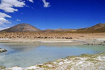 Steppe, open plain, Polloquere springs, thermal baths, Salar de Surire, Salt Lake, Reserva Nacional de las Vicunas, Lauca National Park, Altiplano, Norte Grande, Northern Chile, Chile, South America