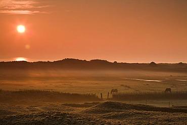 Sunrise near the lighthouse of Texel Island, Holland, Netherlands, Europe