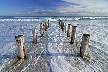 Rotten wood poles leading into the South Pacific Ocean in Saint Kilda Beach, Dunedin, South Island, New Zealand