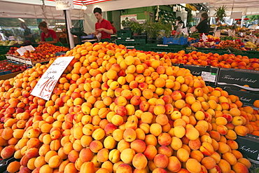 Apricots piled on fruit stall, Viktualienmarkt, Munich, Bavaria, Germany, Europe