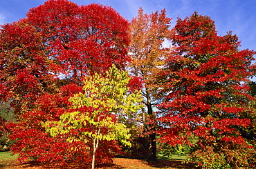 Autumn colours in Sheffield Park Garden, Sussex, England, United Kingdom, Europe