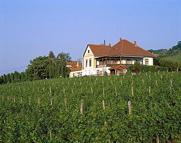 Vineyards and house, Badacsony, Lake Balaton, Hungary, Europe