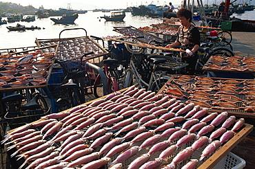 Drying fish, Cheung Chau Island, Hong Kong, China, Asia