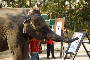 Elephant painting, Elephant Show, Elephant Camp, Chiang Mai, Thailand, Southeast Asia, Asia