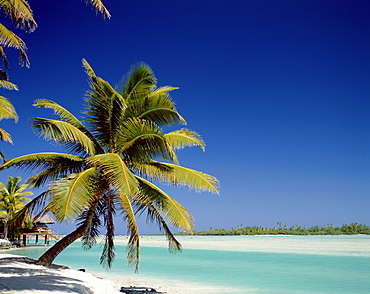 Atoll, palm trees and tropical beach, Aitutaki Island, Cook Islands, Polynesia, South Pacific, Pacific