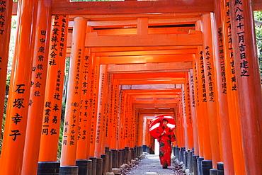 Tunnel of Torii gates, Fushimi Inari Taisha Shrine, Kyoto, Japan, Asia