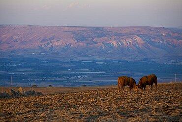 lower Galilee at dawn, Israel
