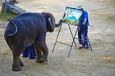 Elephant show for tourist, Mae Sa, Chiang Mai, Thailand, Southeast Asia, Asia