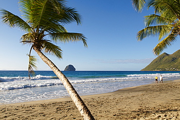 Beach and palm tree, Diamond, Martinique, French Overseas Department, Windward Islands, West Indies, Caribbean, Central America